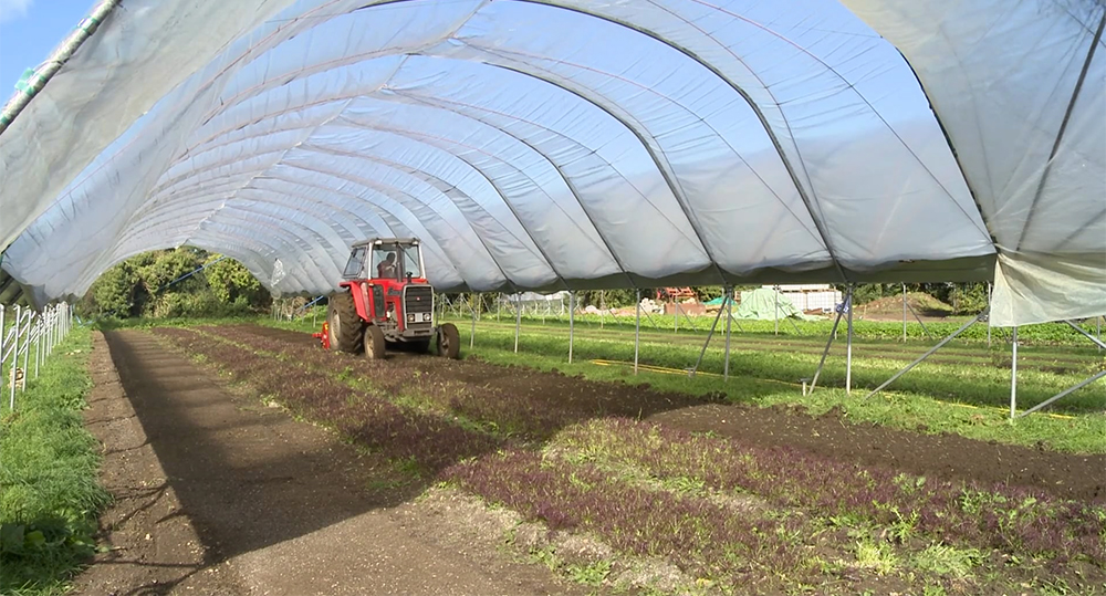 Polytunnels growing salads at The Severn Project, Bristol